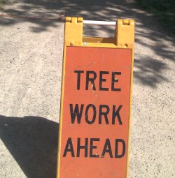 "A bright orange sign reading, ""Tree Work Ahead"", notifies passers by that Tree Trusts' crews are working."